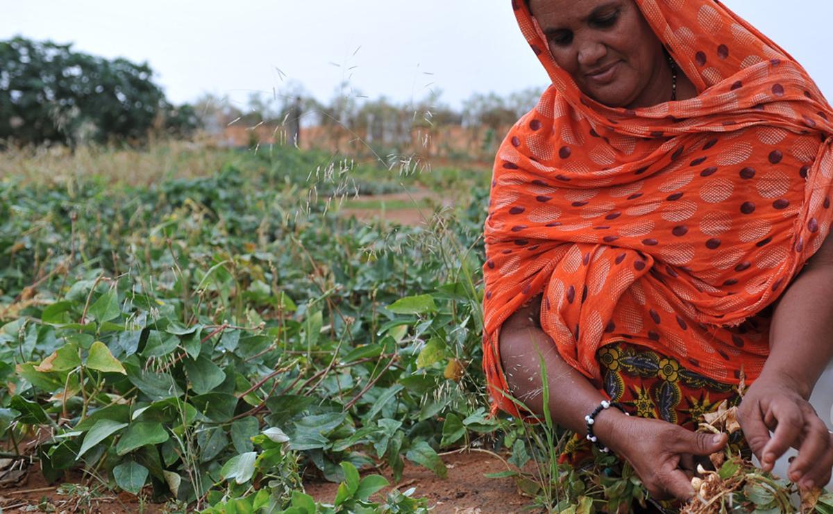 Erdnuss-Ernte: Taya ub Mazou hat der Wüste Lebensmittel abgerungen. Foto: LWB/C. Kästner